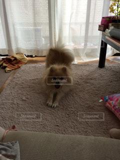 犬 - No.516938