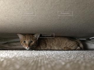 猫 - No.518147