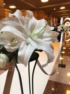花の写真・画像素材[528639]