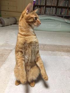 猫 - No.564667