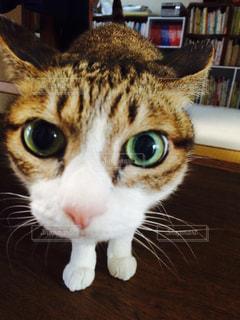 猫の写真・画像素材[567181]