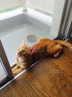 猫の写真・画像素材[592541]