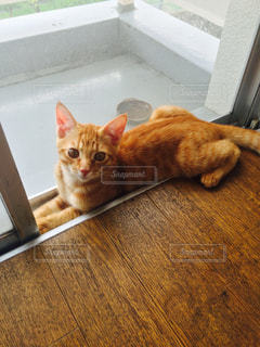 猫 - No.592542