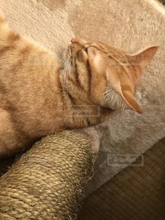 猫 - No.613733
