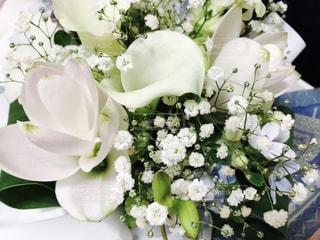 花の写真・画像素材[615241]