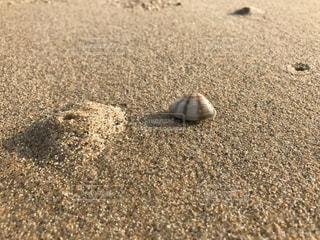 ビーチで小さな動物 - No.721904