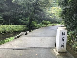 秋芳洞の入り口の写真・画像素材[782905]