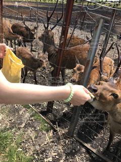 鹿さんに餌やり - No.785391