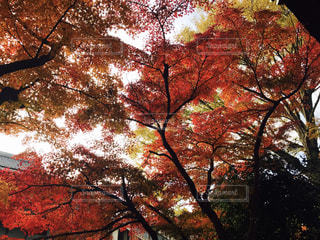 近くの木のアップ - No.927258