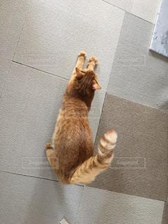 カメラを見ている猫 - No.957132