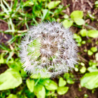 自然の写真・画像素材[518486]