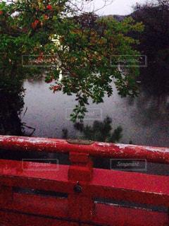 橋の写真・画像素材[542906]