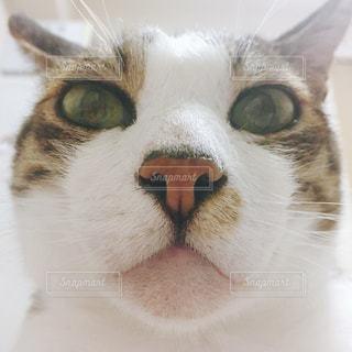 猫の写真・画像素材[517178]