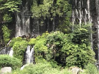 自然の写真・画像素材[540303]
