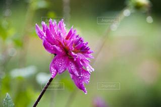 花の写真・画像素材[518641]