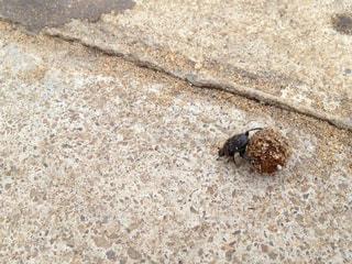 虫の写真・画像素材[521797]