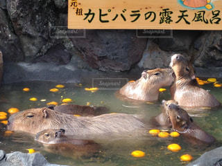 動物の写真・画像素材[528234]