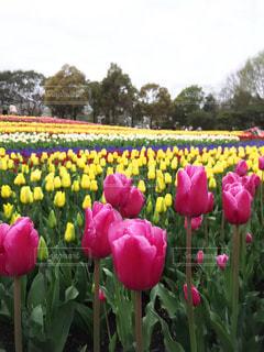 木曽三川公園の写真・画像素材[517876]