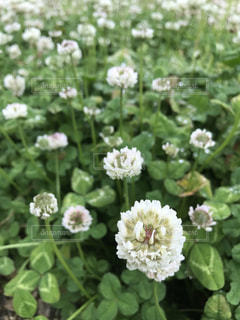 花の写真・画像素材[518134]