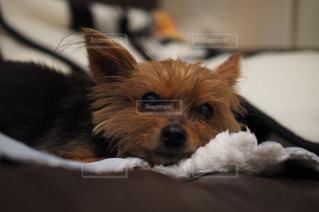 #犬の写真・画像素材[553624]