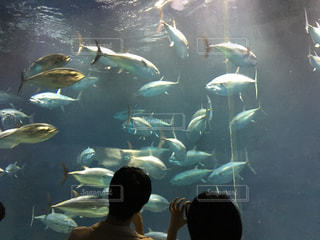 水族館でデート中のカップルの写真・画像素材[1412986]