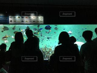 水族館で楽しいひと時の写真・画像素材[1412987]