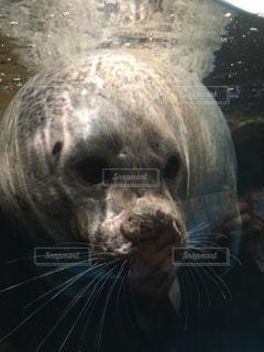 動物の写真・画像素材[523115]