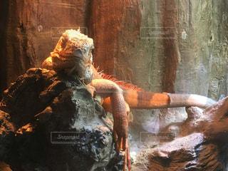動物の写真・画像素材[523137]