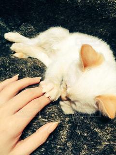 猫の写真・画像素材[518576]