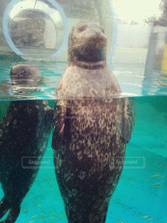 水族館の写真・画像素材[518661]