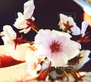 花の写真・画像素材[520030]