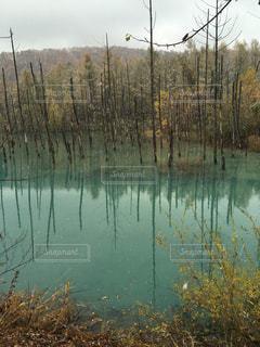 青い池 - No.518760