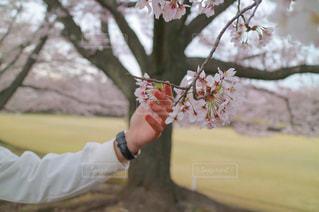 春の写真・画像素材[518997]
