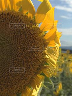 夏の写真・画像素材[519118]