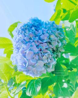 花の写真・画像素材[519348]