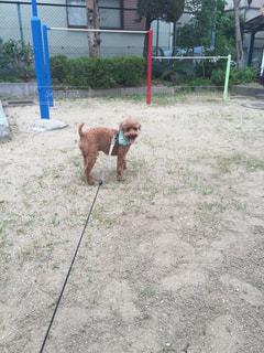 犬 - No.522523