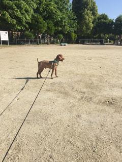 犬 - No.522557