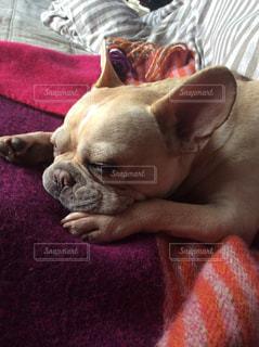 犬の写真・画像素材[523433]