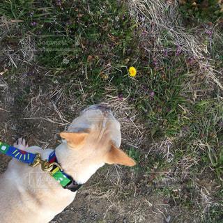 犬の写真・画像素材[523484]