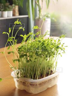 野菜の写真・画像素材[551973]