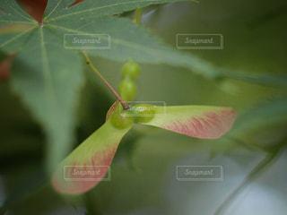 自然の写真・画像素材[555617]