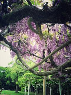 花の写真・画像素材[556966]