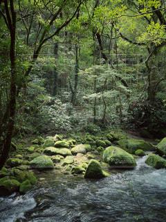 自然の写真・画像素材[556977]