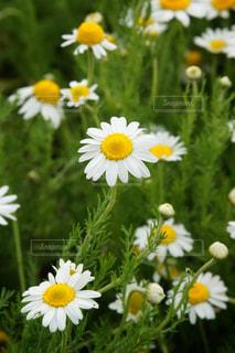 花の写真・画像素材[556998]