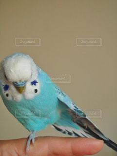 動物の写真・画像素材[561131]