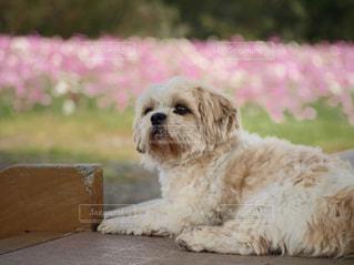 犬の写真・画像素材[561142]