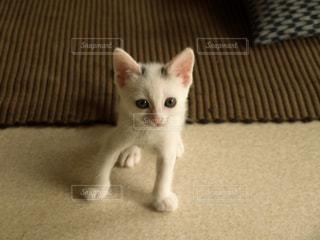 猫の写真・画像素材[563072]