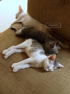 猫の写真・画像素材[563078]