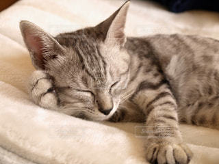 猫の写真・画像素材[566587]