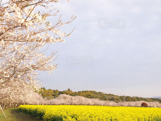 春の写真・画像素材[570349]